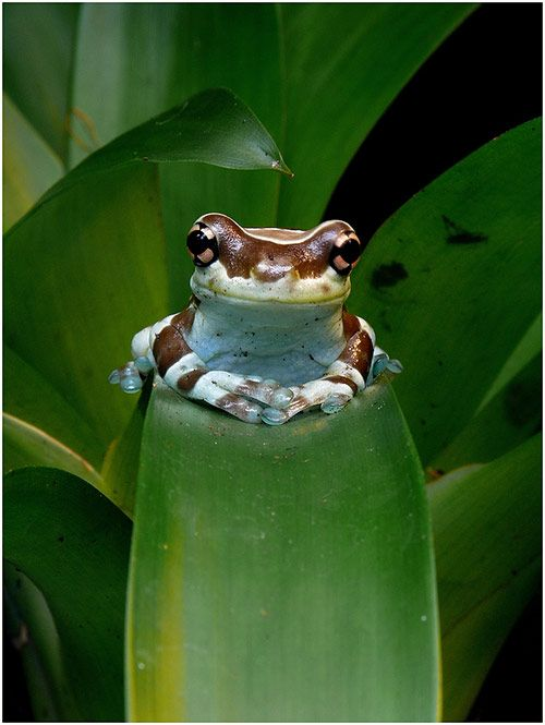 Sitting Still Like A Frog Carrie Chauhan